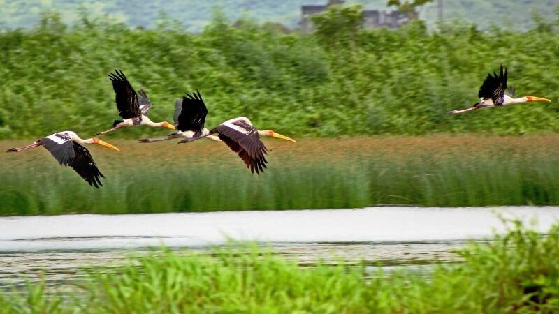 Kharghar-Wetland