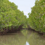 the mangroves